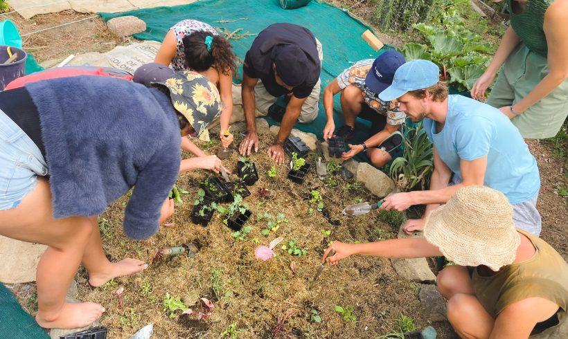 Raranga Rerenga Rauropi: Weaving Biodiversity Community Art Project